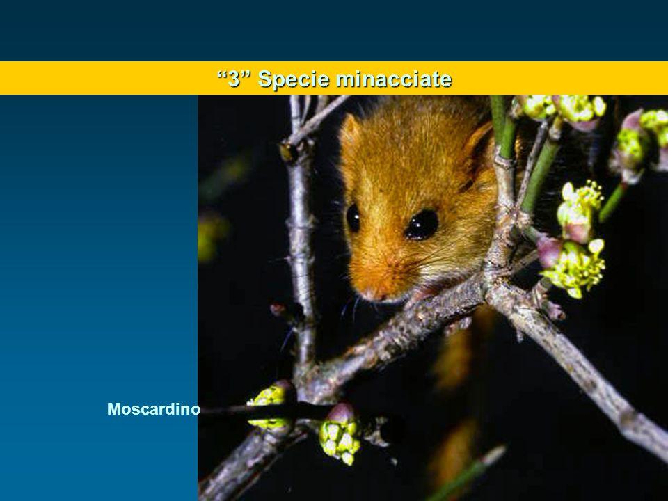 3 Specie minacciate Moscardino