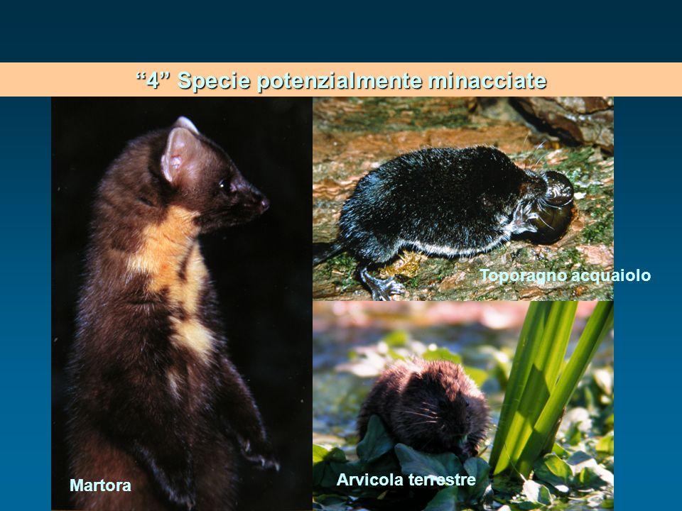 4 Specie potenzialmente minacciate