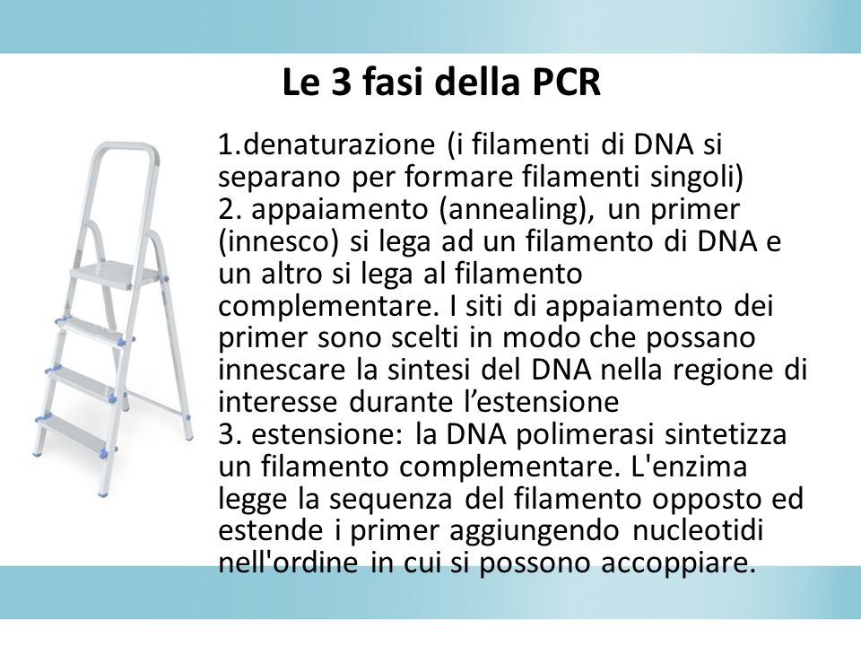 Le 3 fasi della PCR