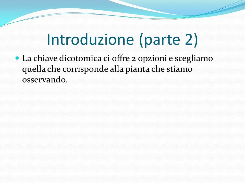 Introduzione (parte 2) La chiave dicotomica ci offre 2 opzioni e scegliamo quella che corrisponde alla pianta che stiamo osservando.