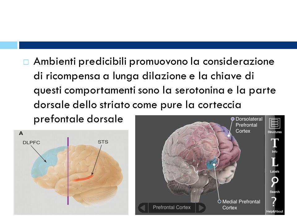 Ambienti predicibili promuovono la considerazione di ricompensa a lunga dilazione e la chiave di questi comportamenti sono la serotonina e la parte dorsale dello striato come pure la corteccia prefontale dorsale