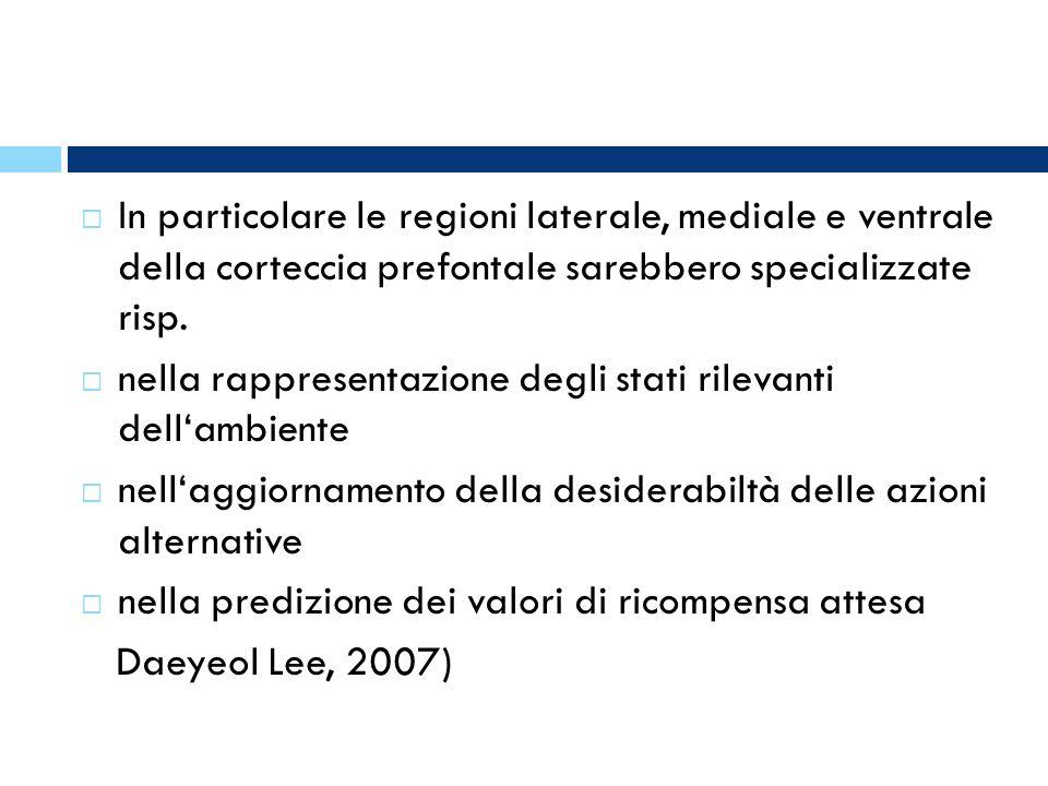 In particolare le regioni laterale, mediale e ventrale della corteccia prefontale sarebbero specializzate risp.