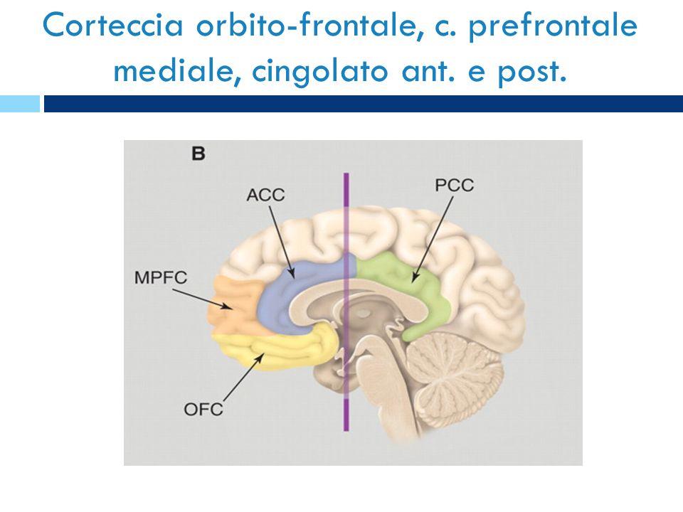 Corteccia orbito-frontale, c. prefrontale mediale, cingolato ant