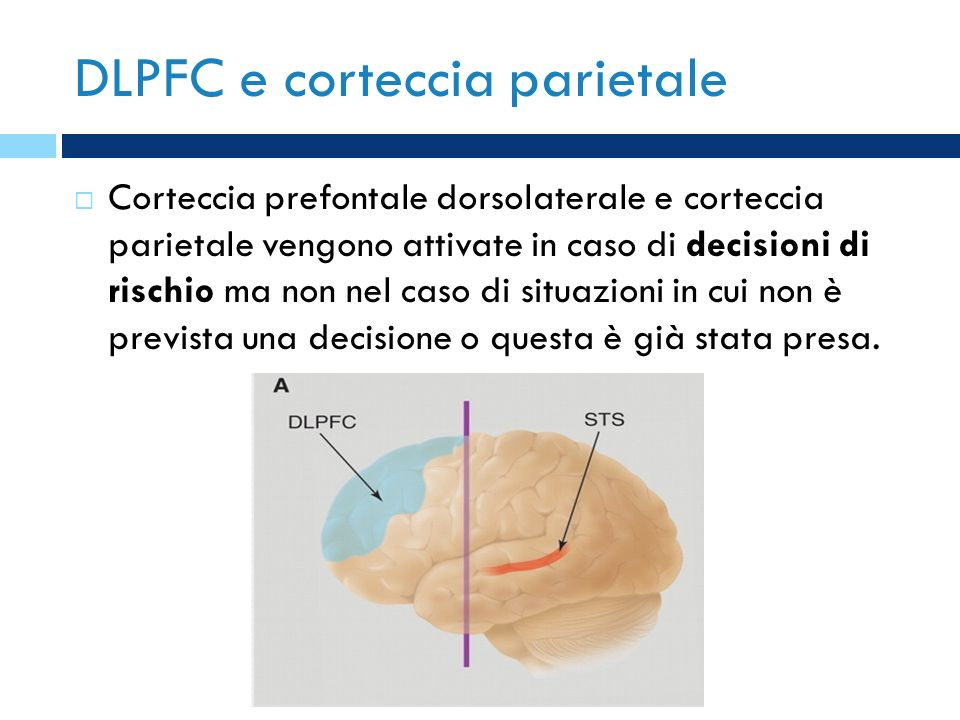 DLPFC e corteccia parietale