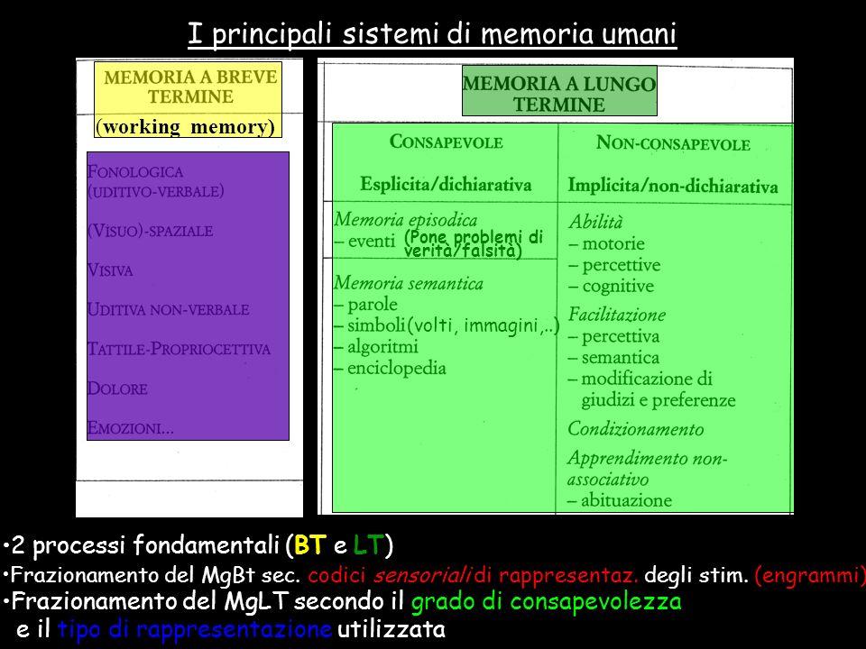 I principali sistemi di memoria umani