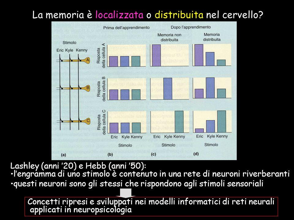 La memoria è localizzata o distribuita nel cervello