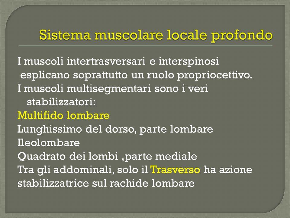 Sistema muscolare locale profondo