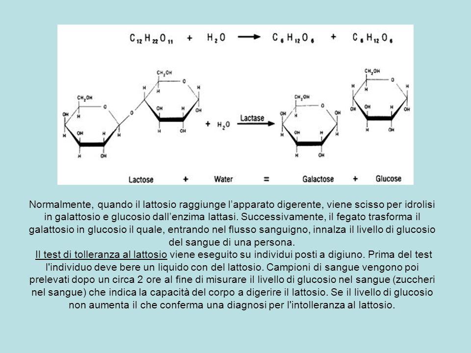 Normalmente, quando il lattosio raggiunge l'apparato digerente, viene scisso per idrolisi in galattosio e glucosio dall'enzima lattasi.