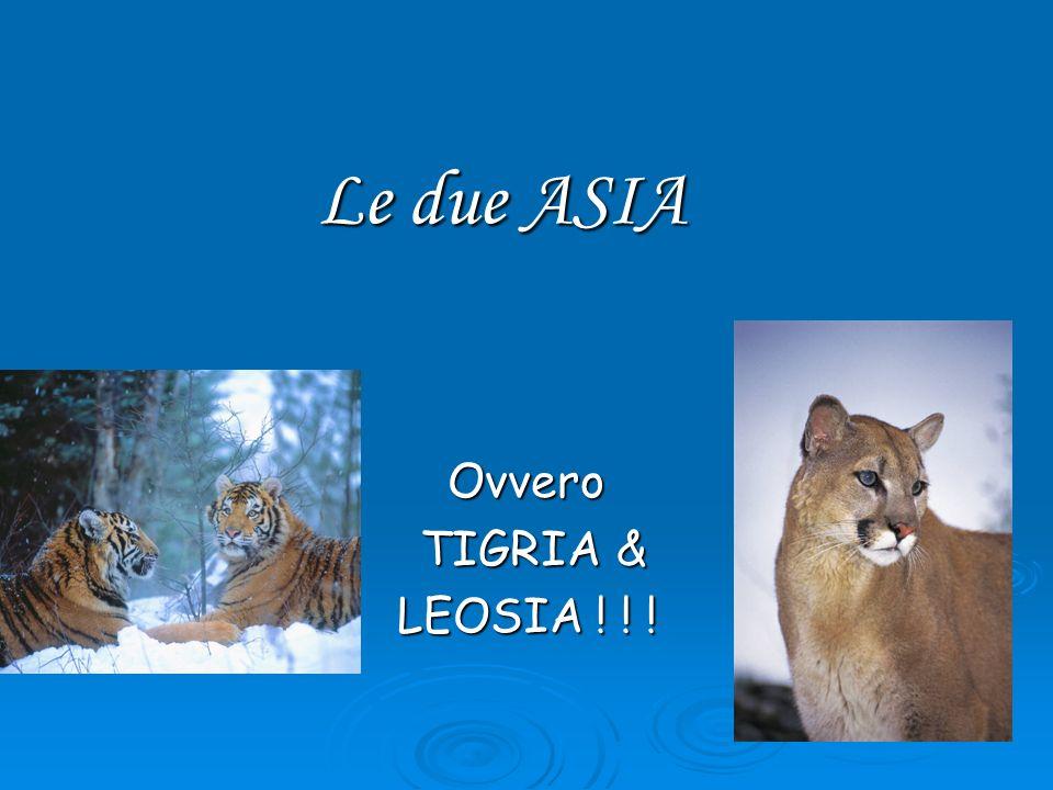 Le due ASIA Ovvero TIGRIA & LEOSIA ! ! !