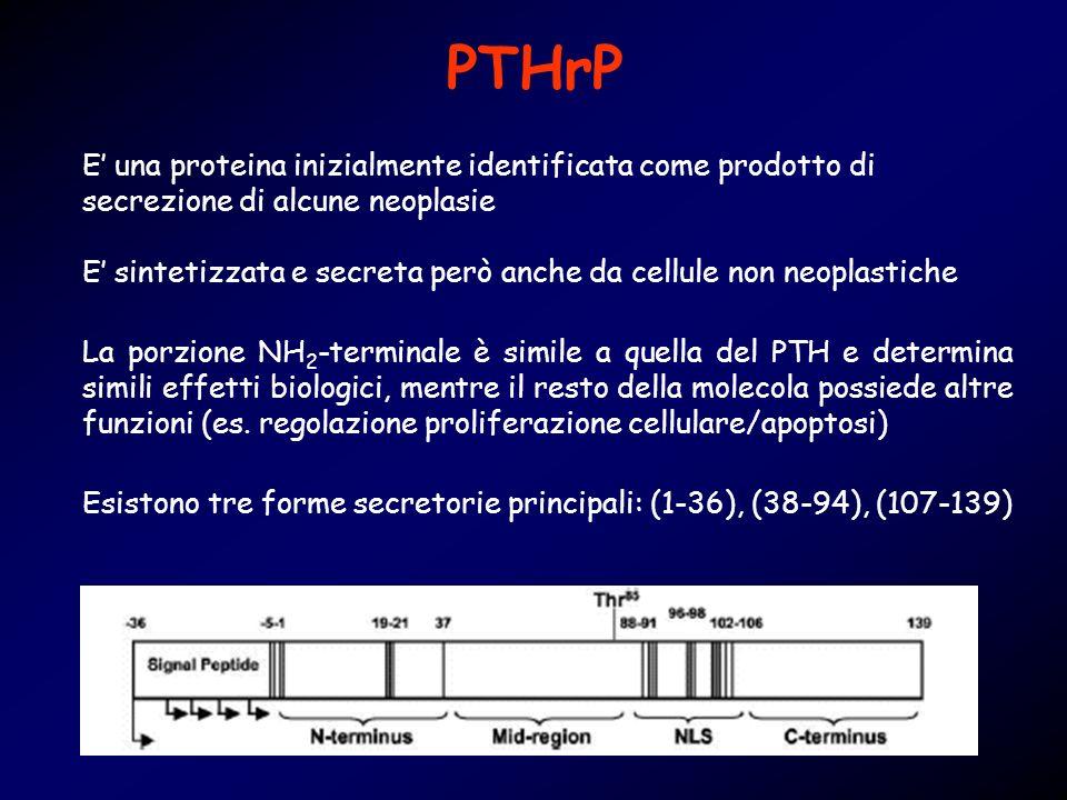 PTHrP E' una proteina inizialmente identificata come prodotto di secrezione di alcune neoplasie.