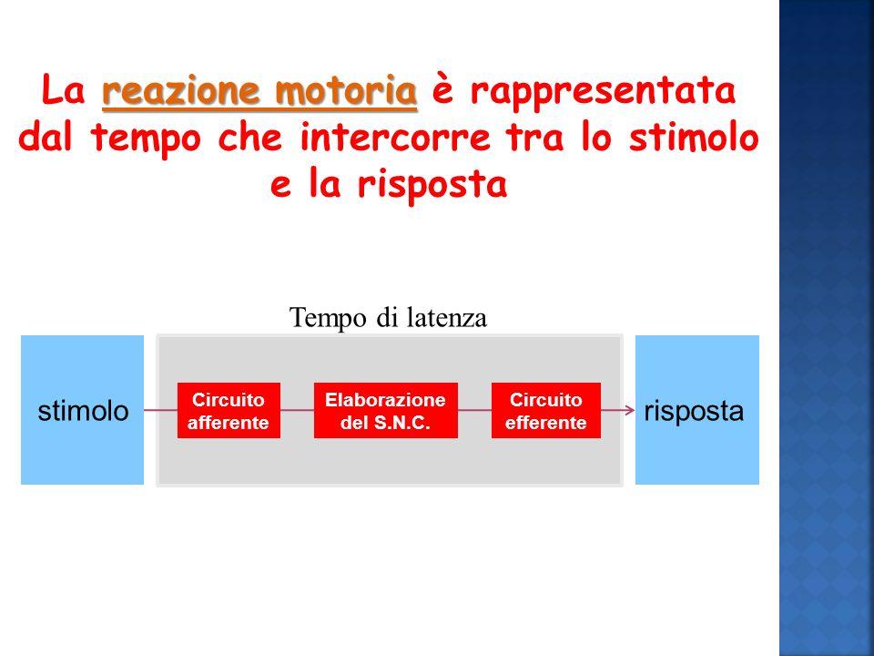 La reazione motoria è rappresentata dal tempo che intercorre tra lo stimolo e la risposta