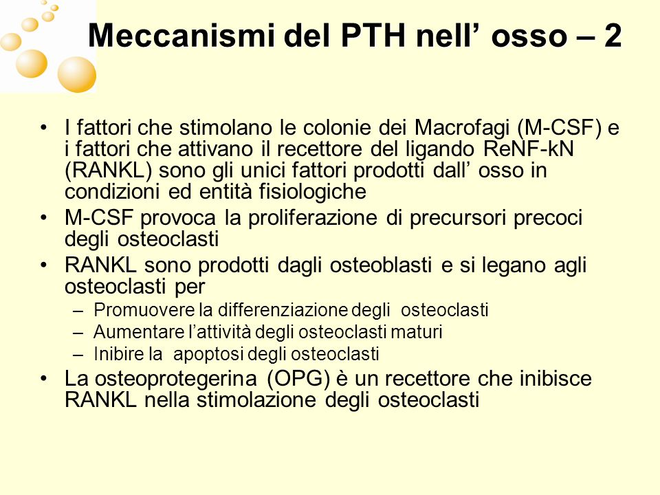 Meccanismi del PTH nell' osso – 2