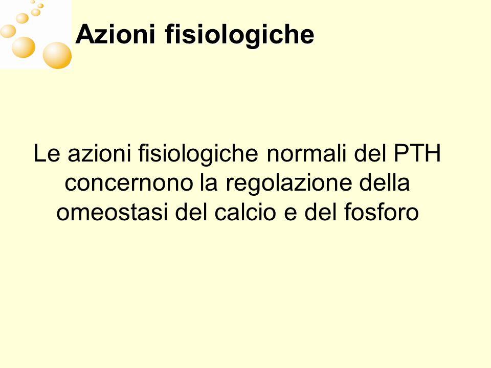 Azioni fisiologiche Le azioni fisiologiche normali del PTH concernono la regolazione della omeostasi del calcio e del fosforo.