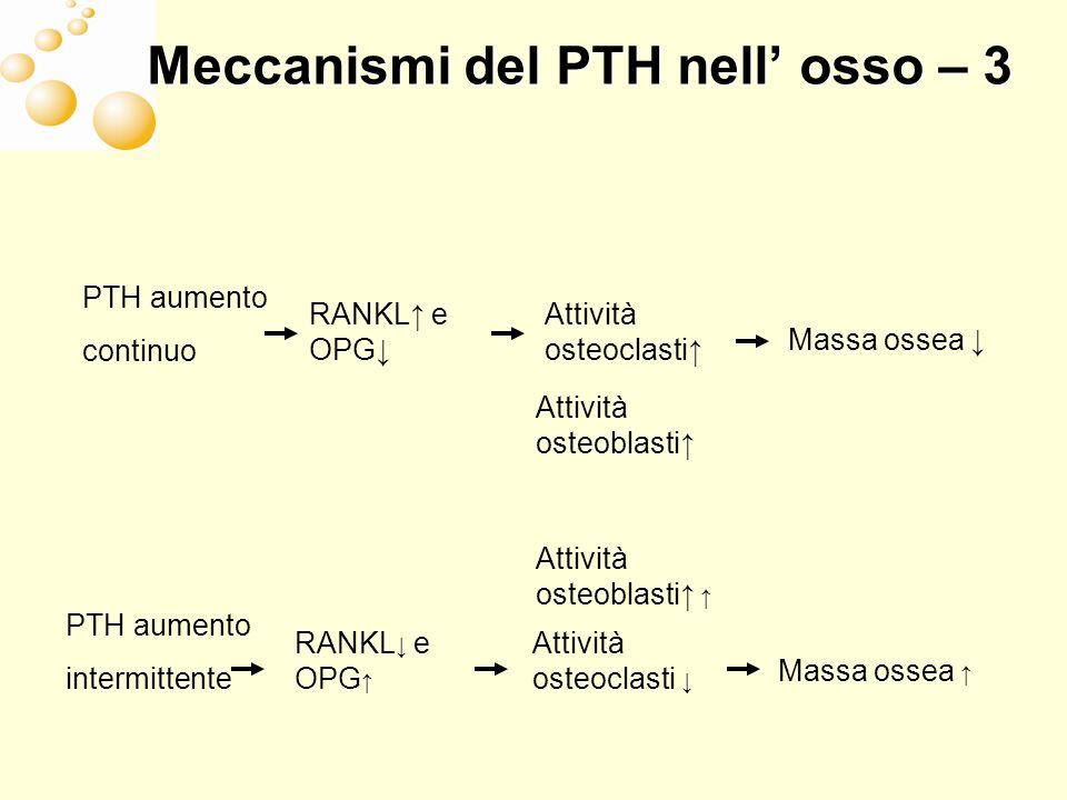 Meccanismi del PTH nell' osso – 3