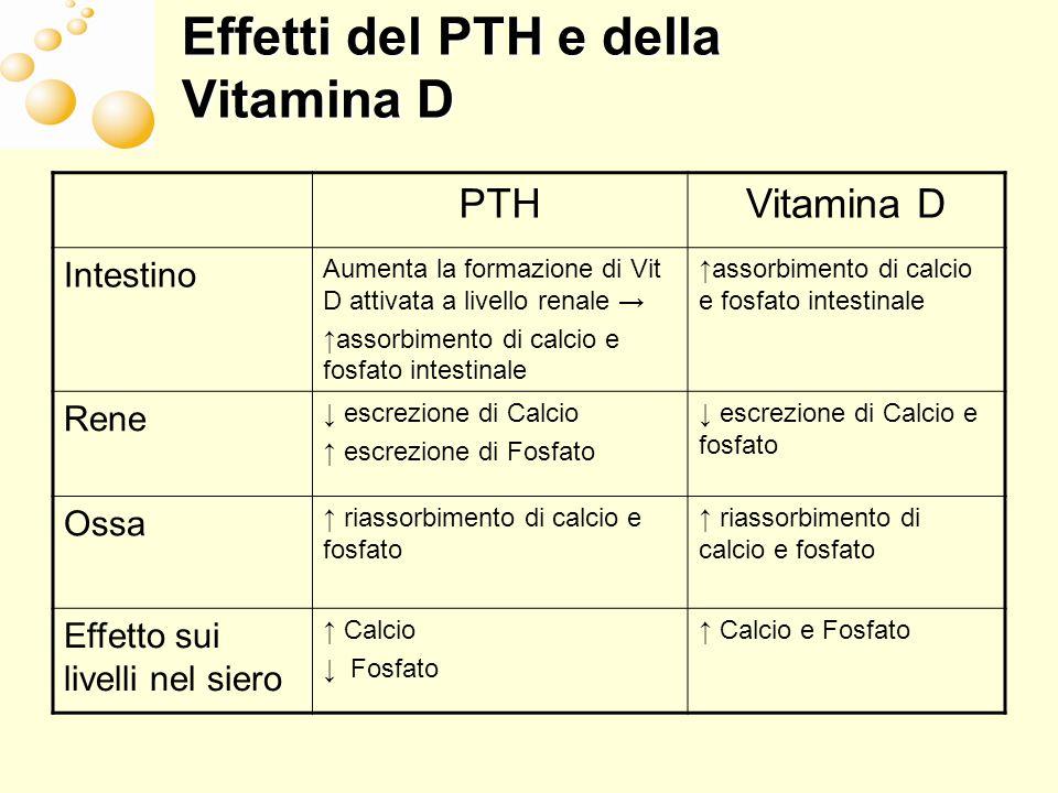 Effetti del PTH e della Vitamina D