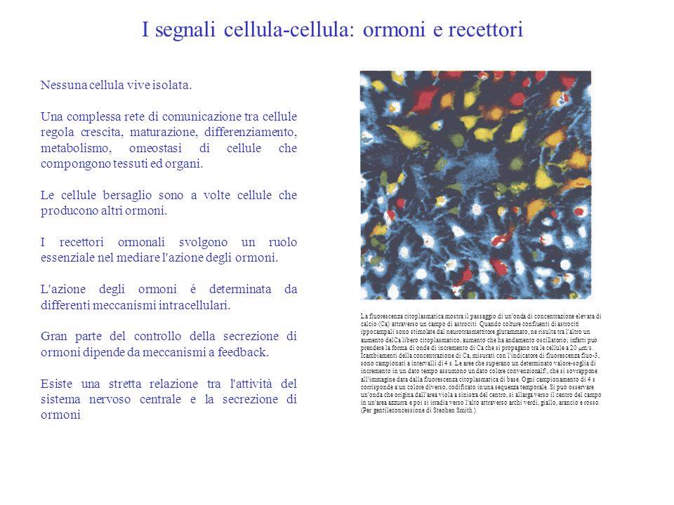 I segnali cellula-cellula: ormoni e recettori