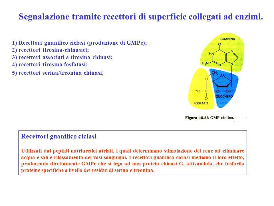 Segnalazione tramite recettori di superficie collegati ad enzimi.