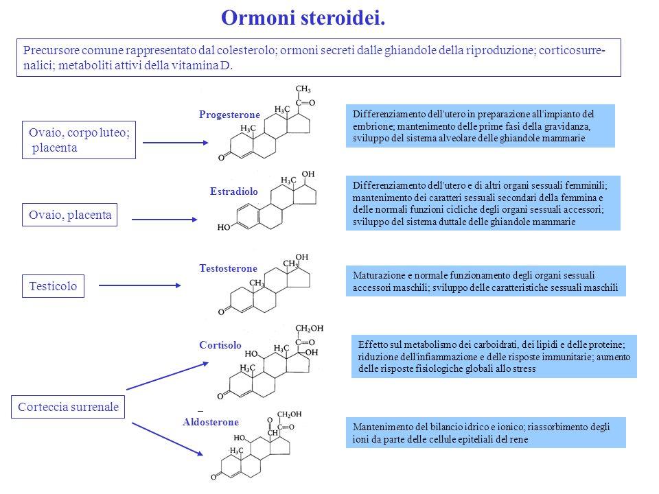 Ormoni steroidei.