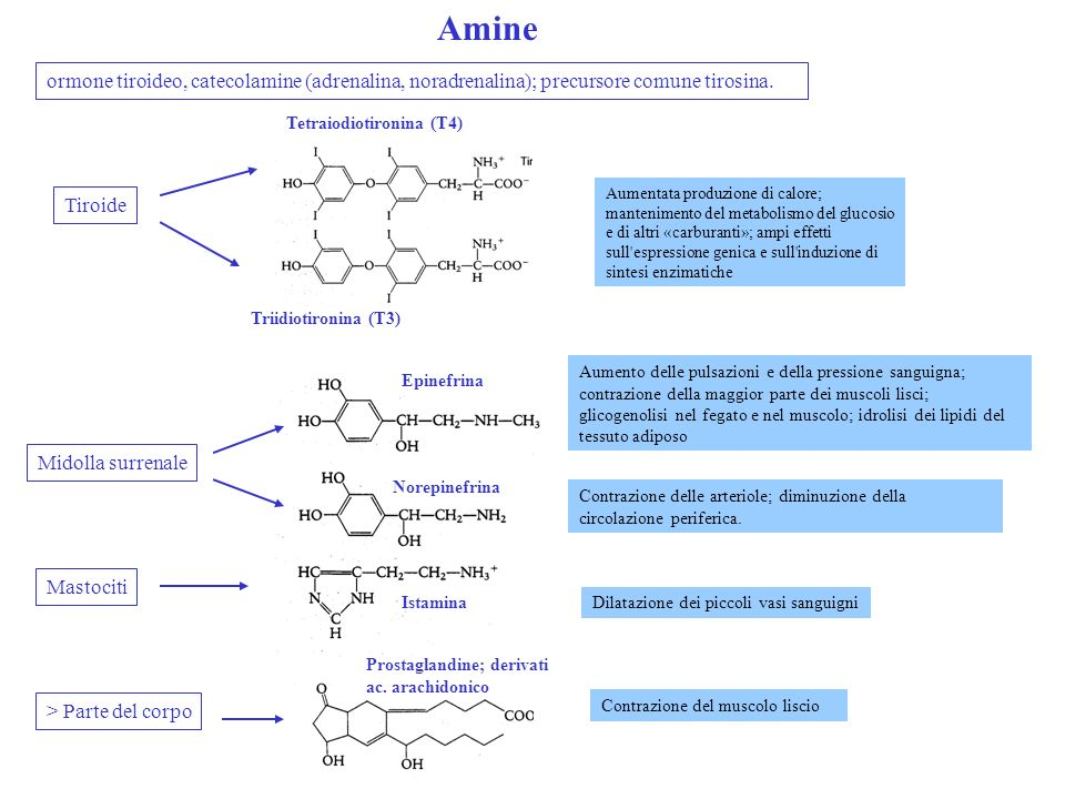 Amineormone tiroideo, catecolamine (adrenalina, noradrenalina); precursore comune tirosina. Tetraiodiotironina (T4)