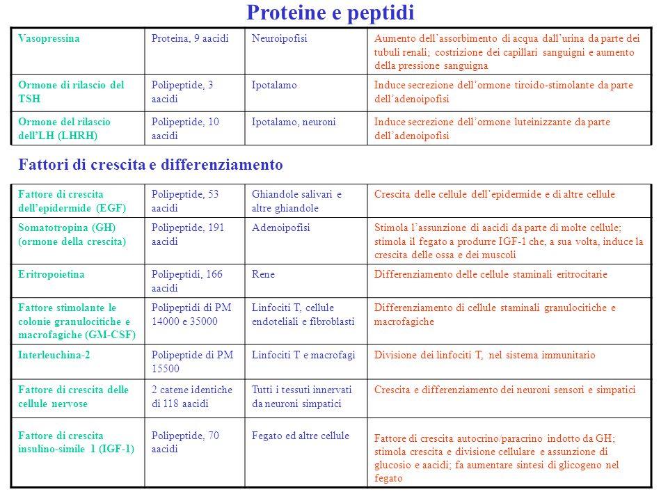 Proteine e peptidi Fattori di crescita e differenziamento Vasopressina