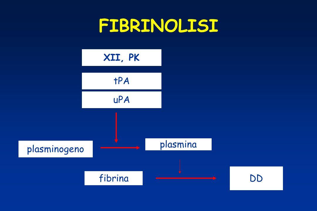 FIBRINOLISI XII, PK tPA uPA plasmina plasminogeno DD fibrina