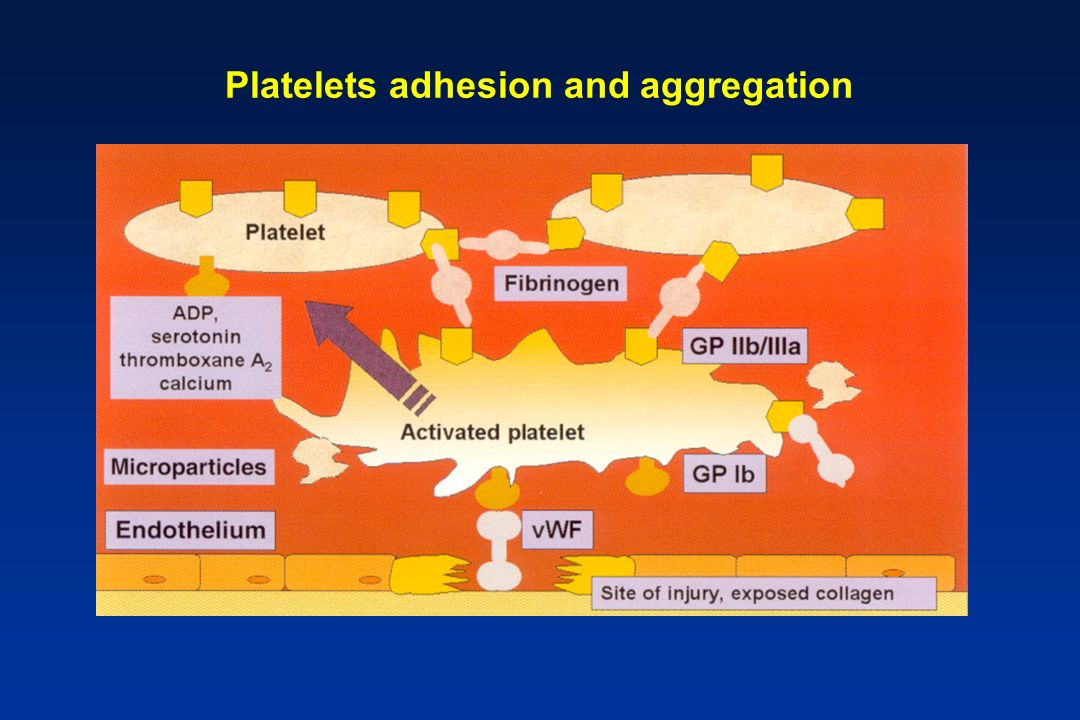 Platelets adhesion and aggregation