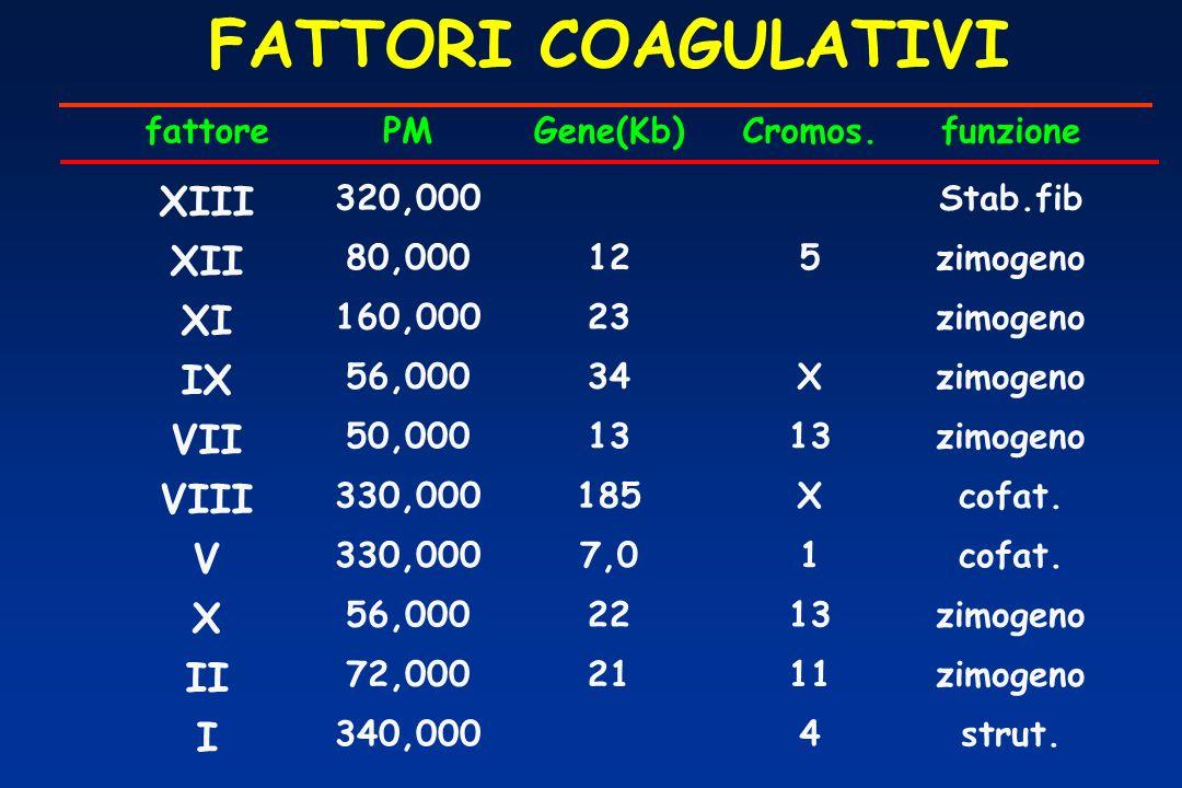 FATTORI COAGULATIVI XIII XII XI IX VII VIII V II I fattore PM Gene(Kb)