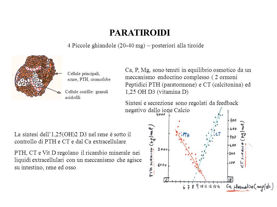 PARATIROIDI 4 Piccole ghiandole (20-40 mg) – posteriori alla tiroide