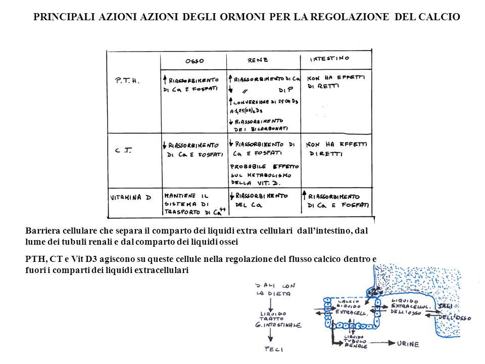 PRINCIPALI AZIONI AZIONI DEGLI ORMONI PER LA REGOLAZIONE DEL CALCIO