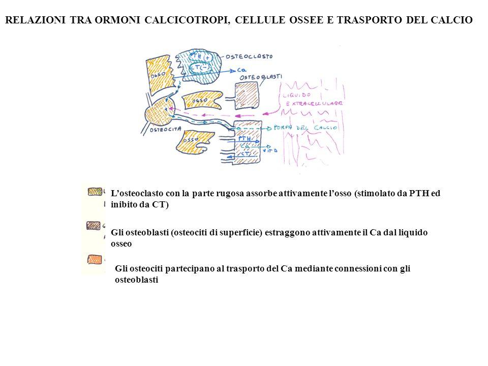 RELAZIONI TRA ORMONI CALCICOTROPI, CELLULE OSSEE E TRASPORTO DEL CALCIO