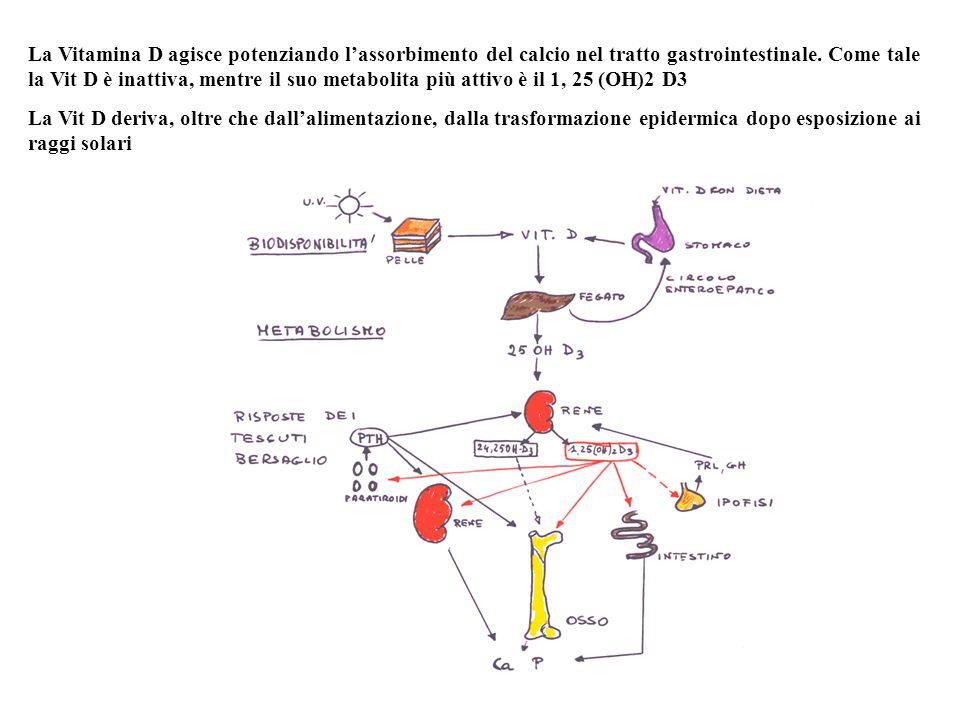 La Vitamina D agisce potenziando l'assorbimento del calcio nel tratto gastrointestinale. Come tale la Vit D è inattiva, mentre il suo metabolita più attivo è il 1, 25 (OH)2 D3