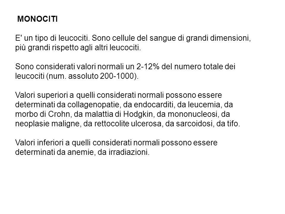 MONOCITI E un tipo di leucociti. Sono cellule del sangue di grandi dimensioni, più grandi rispetto agli altri leucociti.
