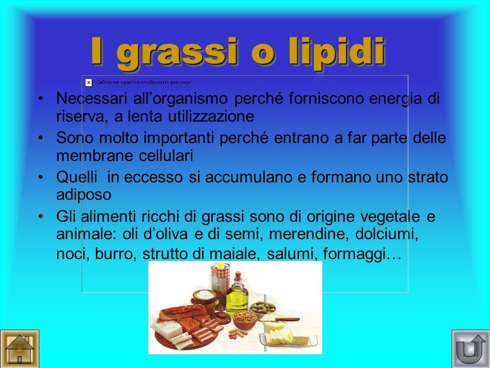 I grassi o lipidi Necessari all'organismo perché forniscono energia di riserva, a lenta utilizzazione.
