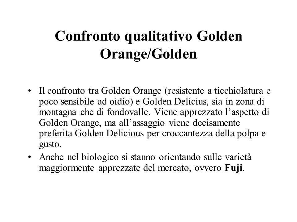 Confronto qualitativo Golden Orange/Golden
