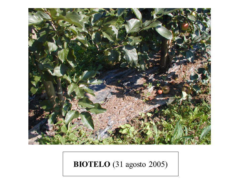 BIOTELO (31 agosto 2005)
