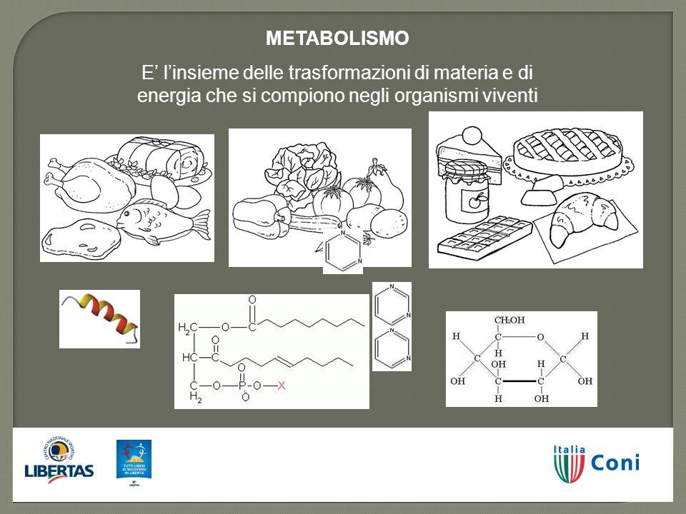 METABOLISMO E' l'insieme delle trasformazioni di materia e di energia che si compiono negli organismi viventi.