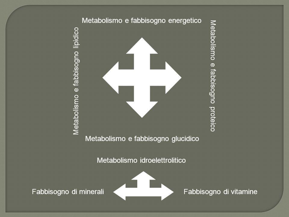 Metabolismo e fabbisogno energetico