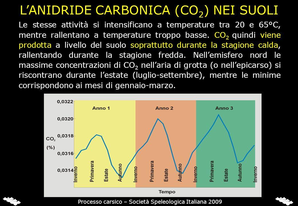 DISTRIBUZIONE GLOBALE DI CO2 NEI SUOLI