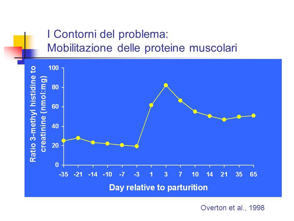 I Contorni del problema: Mobilitazione delle proteine muscolari