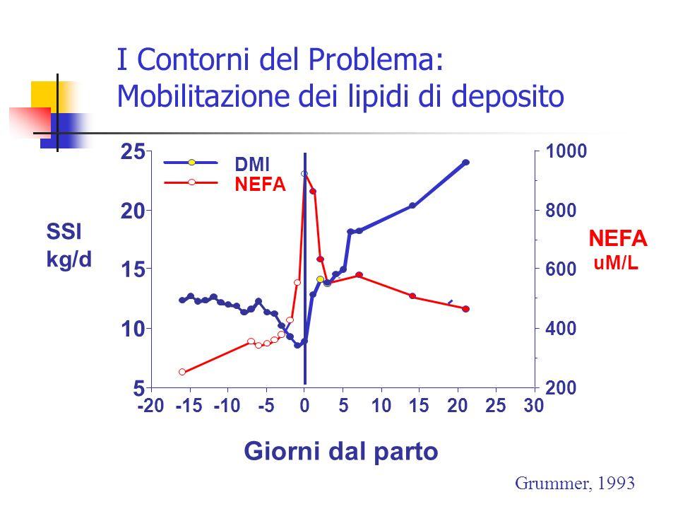 I Contorni del Problema: Mobilitazione dei lipidi di deposito