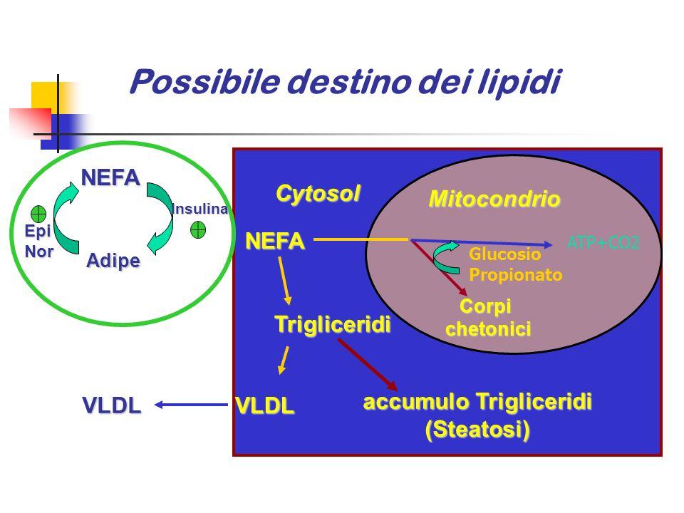 Possibile destino dei lipidi accumulo Trigliceridi