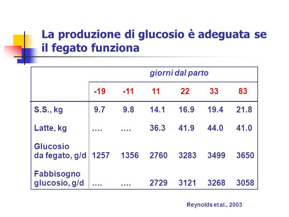 La produzione di glucosio è adeguata se il fegato funziona