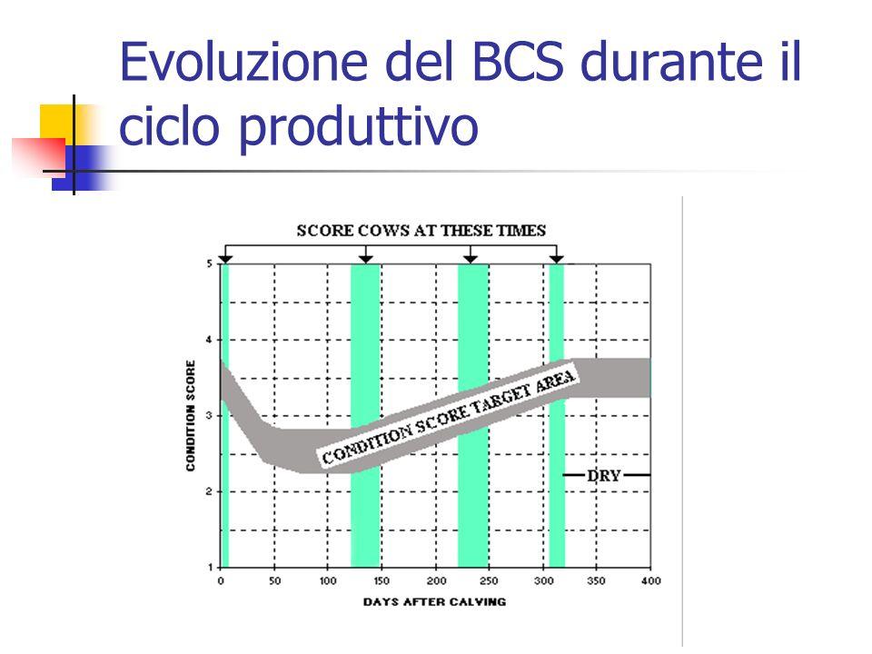Evoluzione del BCS durante il ciclo produttivo