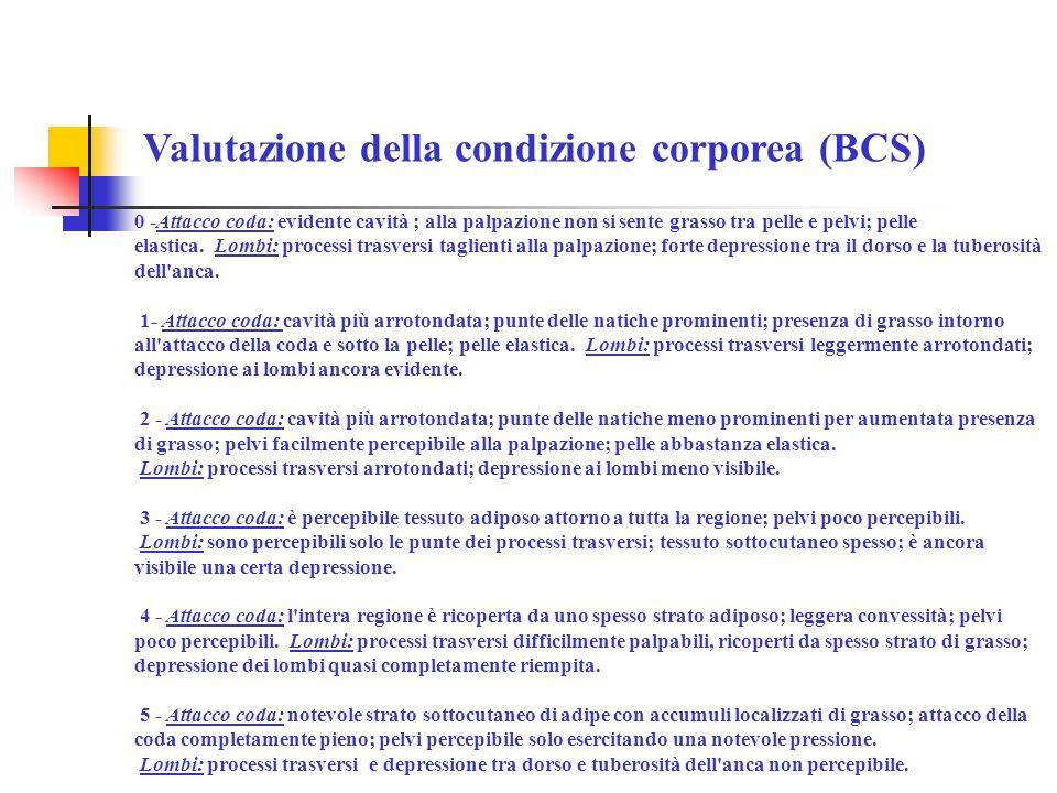 Valutazione della condizione corporea (BCS)