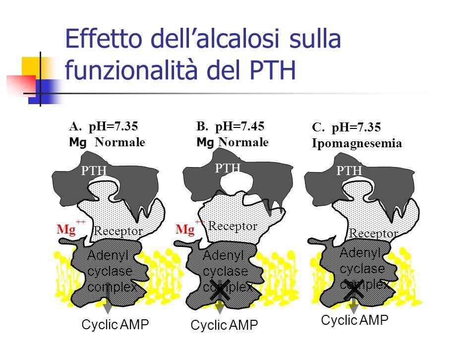 Effetto dell'alcalosi sulla funzionalità del PTH