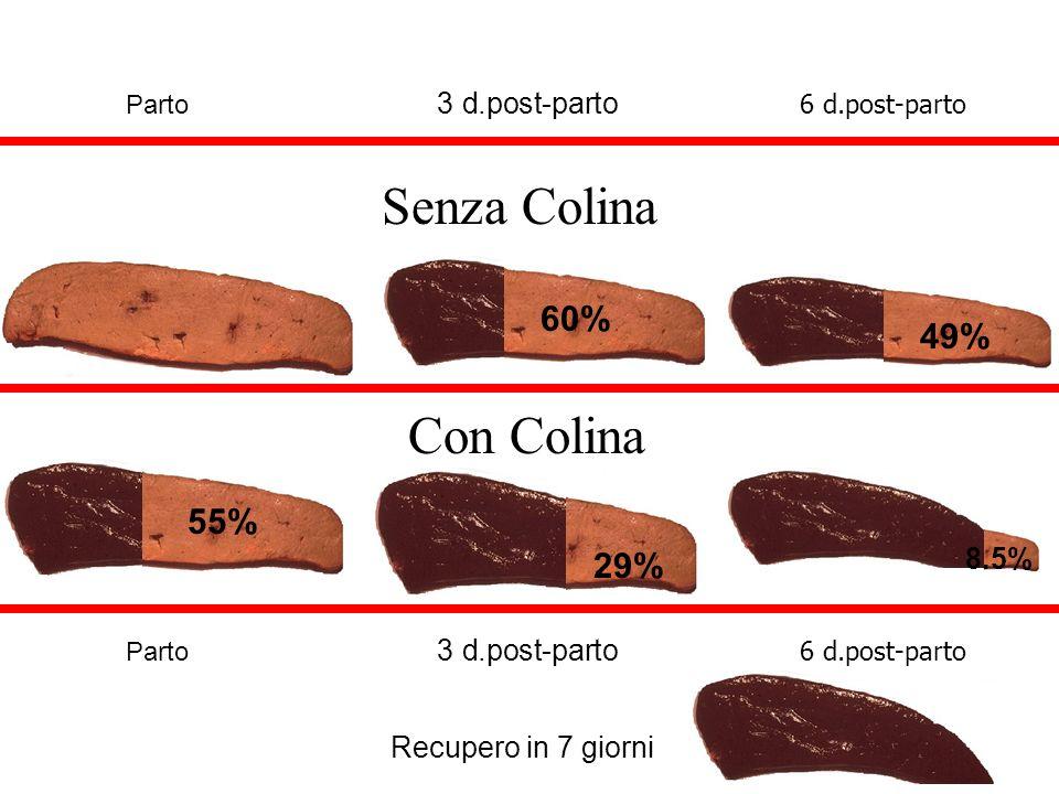 Senza Colina Con Colina 60% 49% 55% 8.5% 29% Recupero in 7 giorni