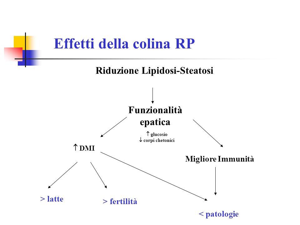 Effetti della colina RP Riduzione Lipidosi-Steatosi