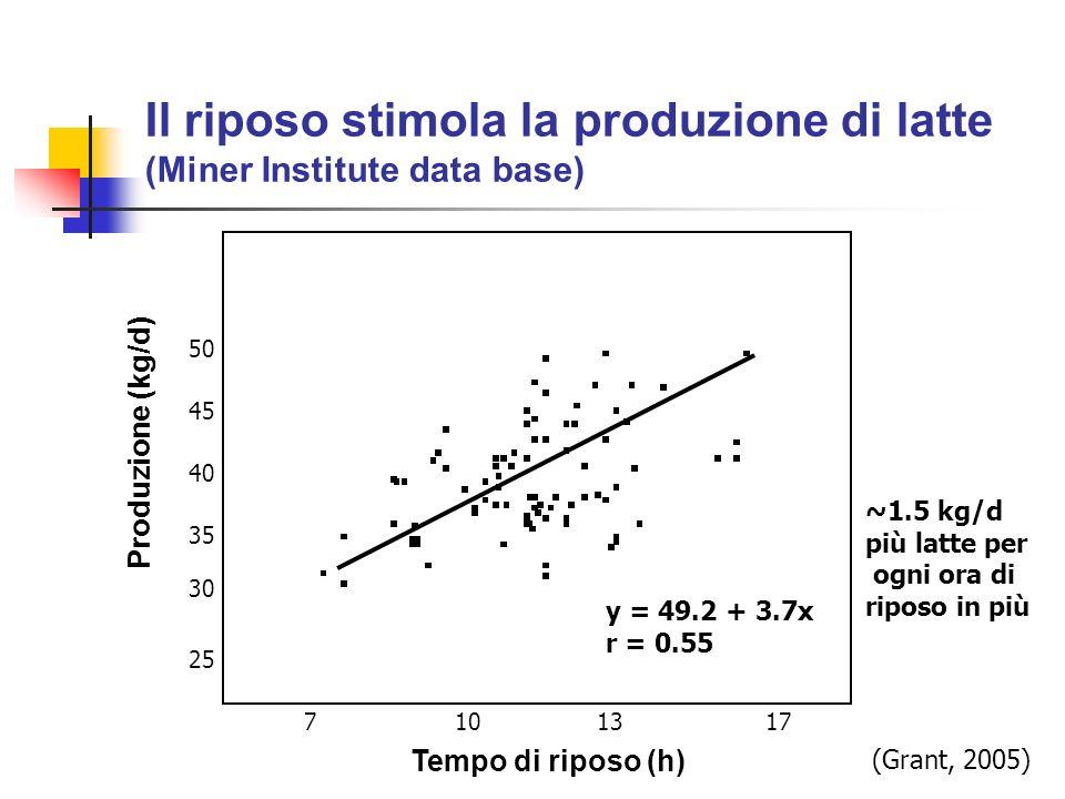 Il riposo stimola la produzione di latte (Miner Institute data base)