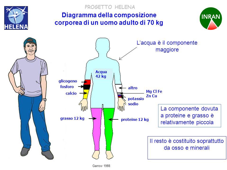 Diagramma della composizione corporea di un uomo adulto di 70 kg