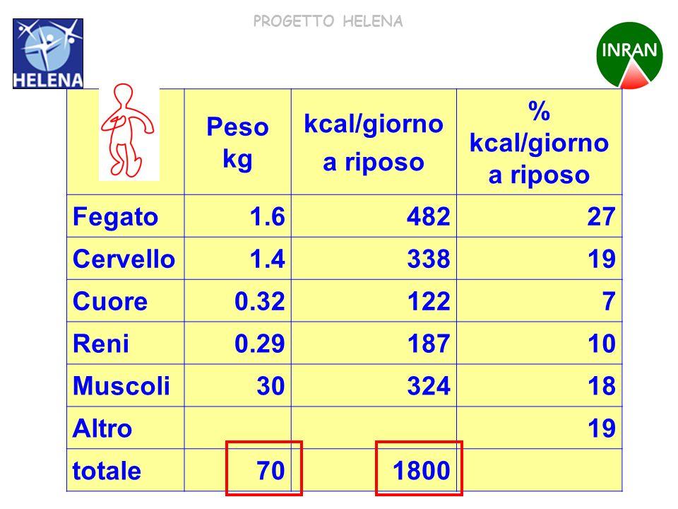 Peso kg kcal/giorno. a riposo. % kcal/giorno a riposo. Fegato. 1.6. 482. 27. Cervello. 1.4.